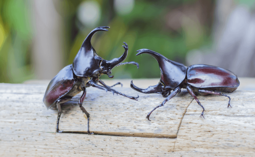 カブトムシの飼育方法(成虫と幼虫)ペットボトルやえさについて!