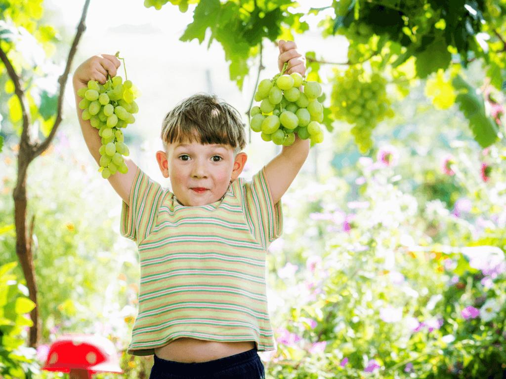 山梨のぶどう狩りは子供も喜ぶ!人気ぶどう園は?
