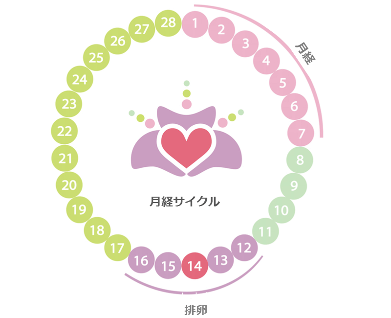【医師監修】生理周期25日って長い?短い?生理周期の計算方法から仕組みまで解説
