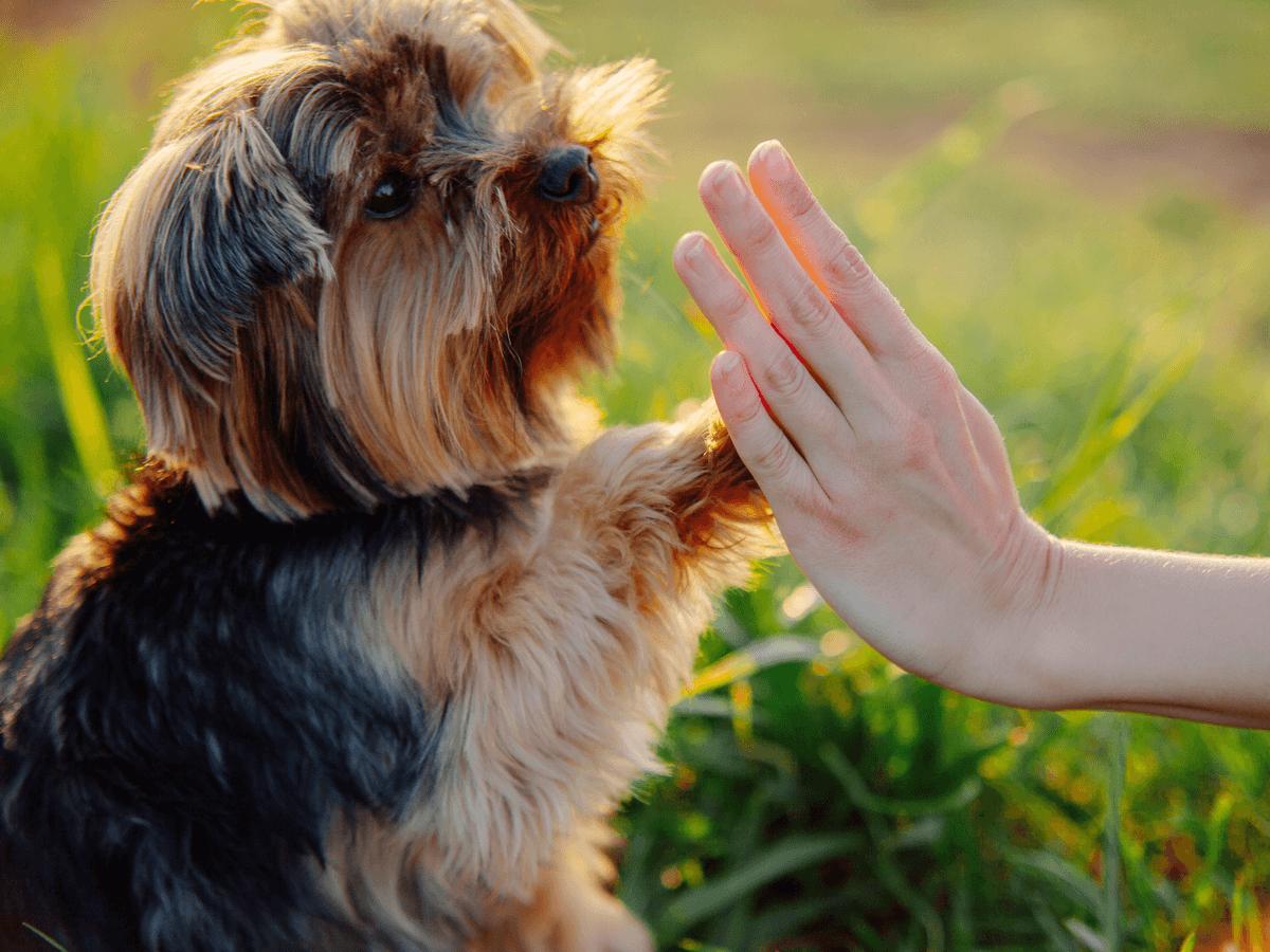 共働き夫婦はいつペットをしつけすればいいの?