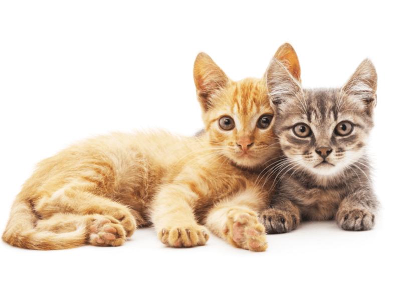 共働きの夫婦がペットを飼う時に大切な4つのこととおススメの動物5選
