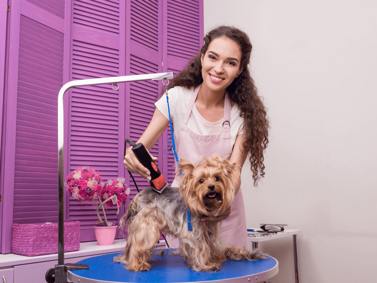 トリマーの仕事はペットの美容と健康を守ること!活躍するために必要な資格やスキルとは?