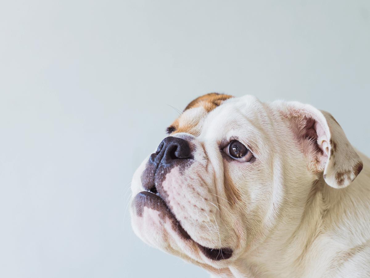 動物介護士とは動物の尊い命と向き合う仕事!働き場所はどんなところ?