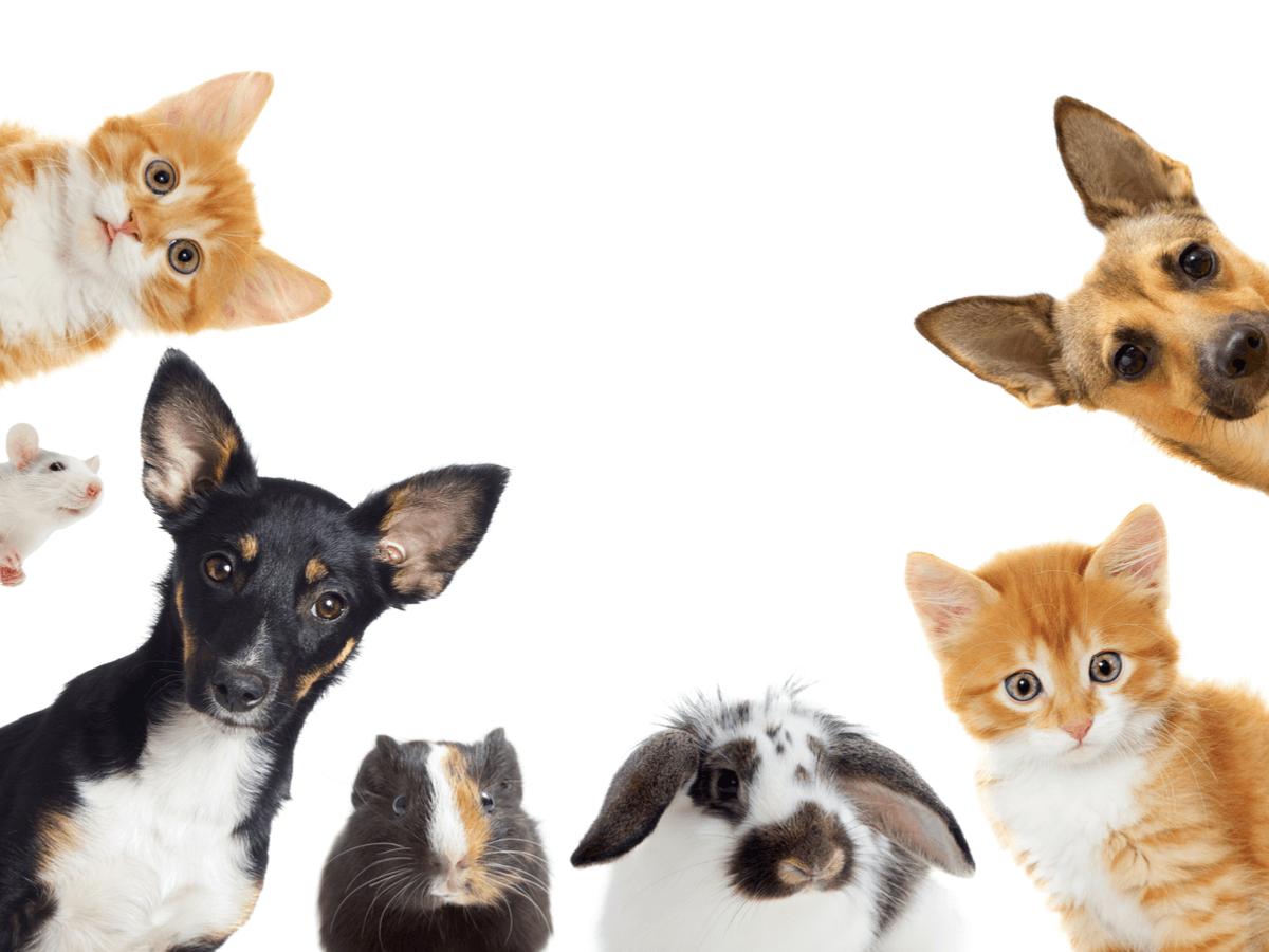動物業界の求人サイトを比較!自分に合った職場を選ぶためのおすすめ求人サイトとは